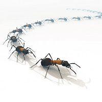 Come allontanare le formiche da casa con rimedi naturali - Come allontanare le formiche da casa ...