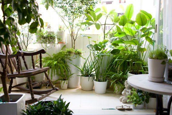 Fiori e piante, le accortezze da seguire se si sceglie di ...