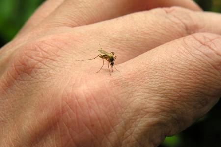 miti da sfatare punture zanzare