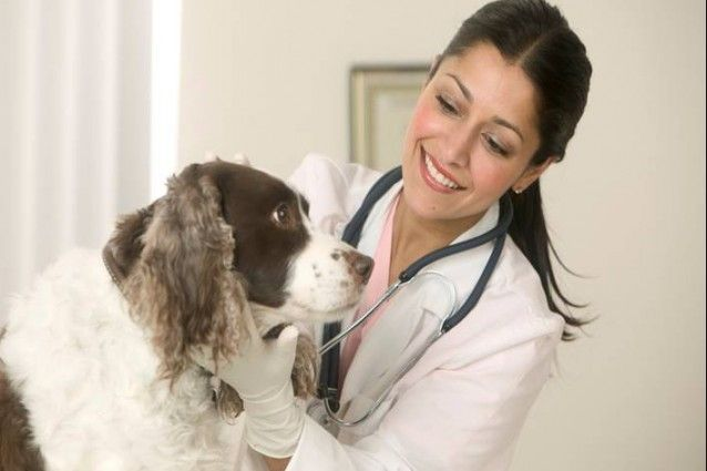 veterinario-638x425