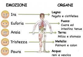 organi-emozioni