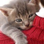 gatti_pensano_uomini_gatti_piu_grandi