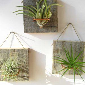 piante-aeree-tillandsia-casa-esempi-idee-03-700x697