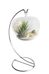 piante-aeree-tillandsia-casa-esempi-idee-12