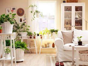 piante-da-appartamento-con-fiori_ng1
